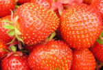 Erdbeere Frucht rot Fragaria 03