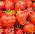 Erdbeere Frucht rot Fragaria 07