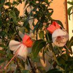 Fuchsia Fuchsie 03