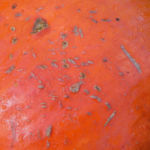 Garten Kuerbis Frucht orange Cucurbita pepo 03