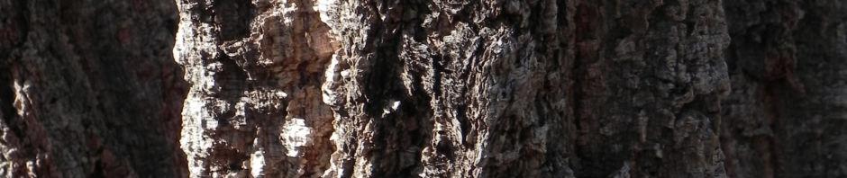 hakea-bluete-blatt-rinde-weisslich-graubraun-gruen-hakea-lorea