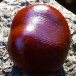 Kastanie Aesculus hippocastanum 01