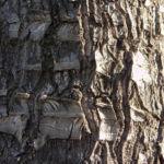 Riesen Palmlilie Blatt gruen Yucca elephantipes 03