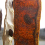 Robinie Winter Frucht Robinia pseudo acacia 04
