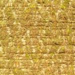 Rotbuche Baum Bucheckern Rinde Blatt Fagus sylvatica 06