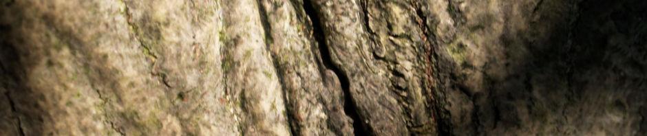gewoehnlicher-spindelstrauch-pfaffenhuetchen-frucht-rot-orange-euonymus-europaeus